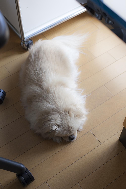 Fluffy Ponta